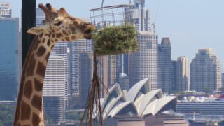 Wildlife Retreat at Taronga